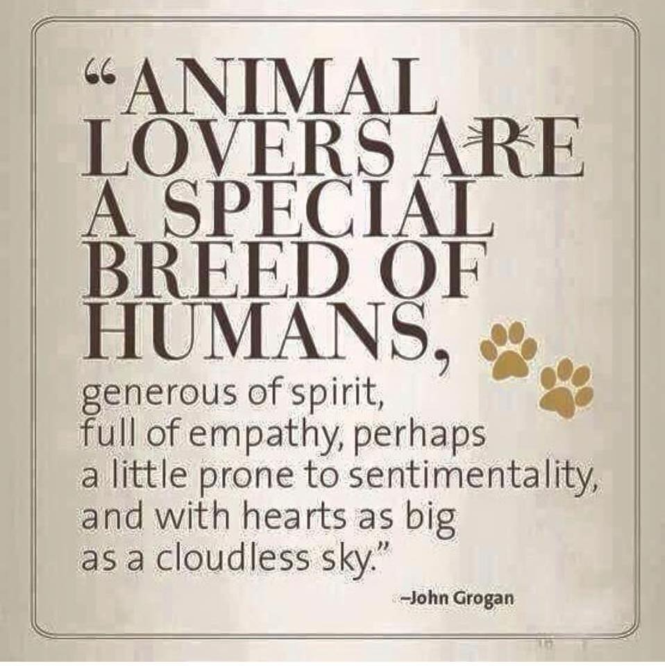 Animal Lovers are a Special Breed of Humans