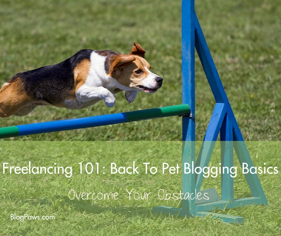 Freelancing 101 back to pet blogging basics