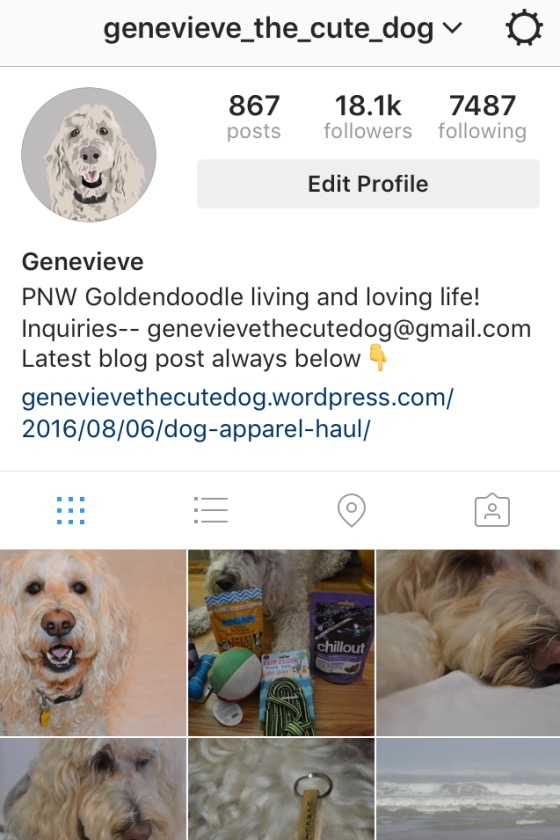 Genevieve the Cute Dog shares Instagram tips