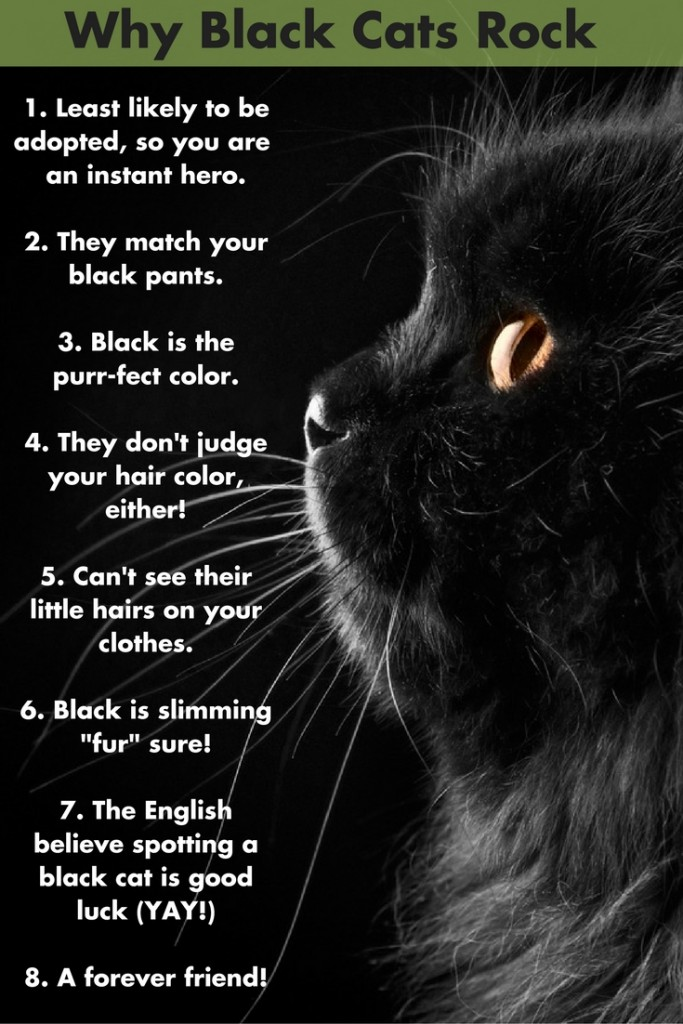 Black Cats Appreciation Day