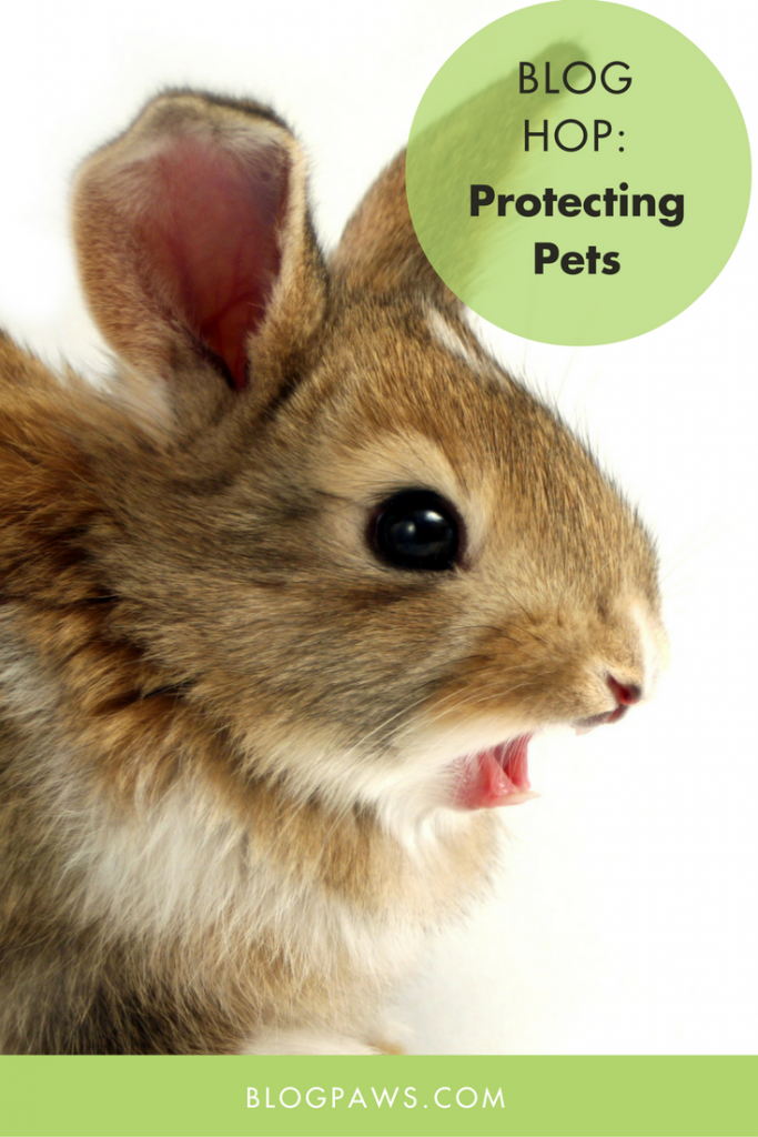 Protecting Pets blog hop