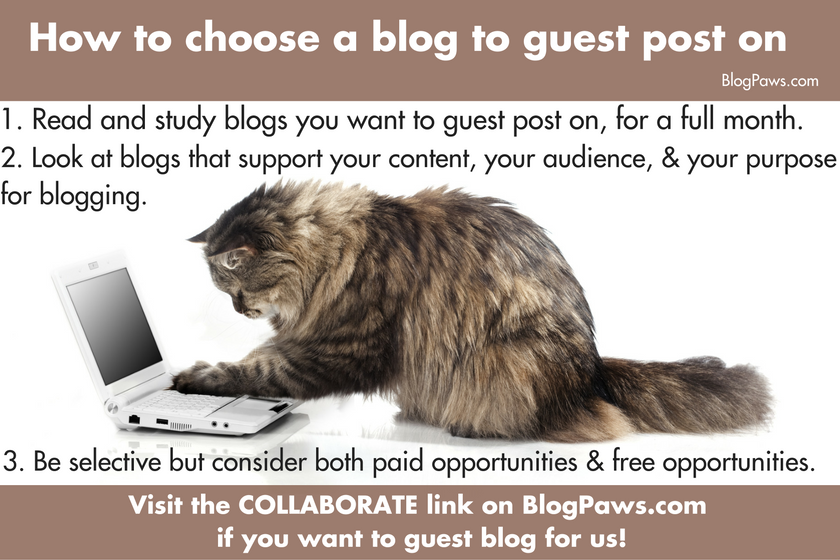 how to choose a blog to guest post on