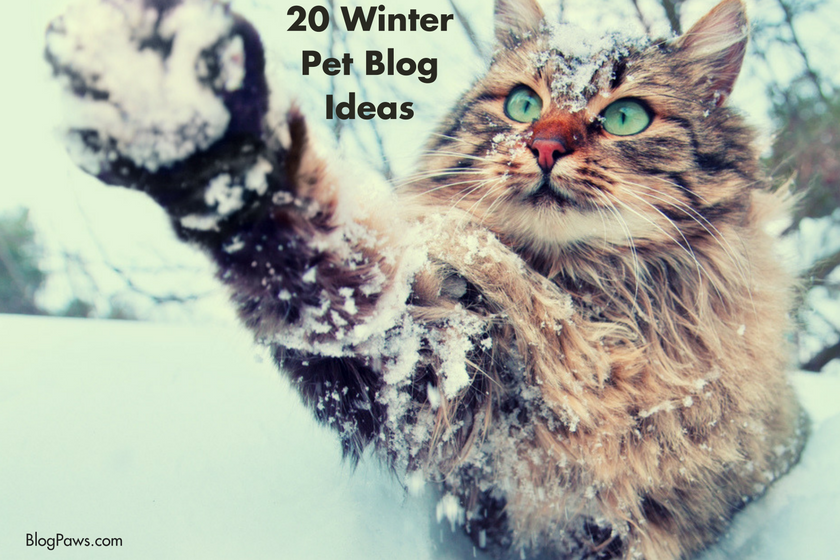 Pet blog winter ideas