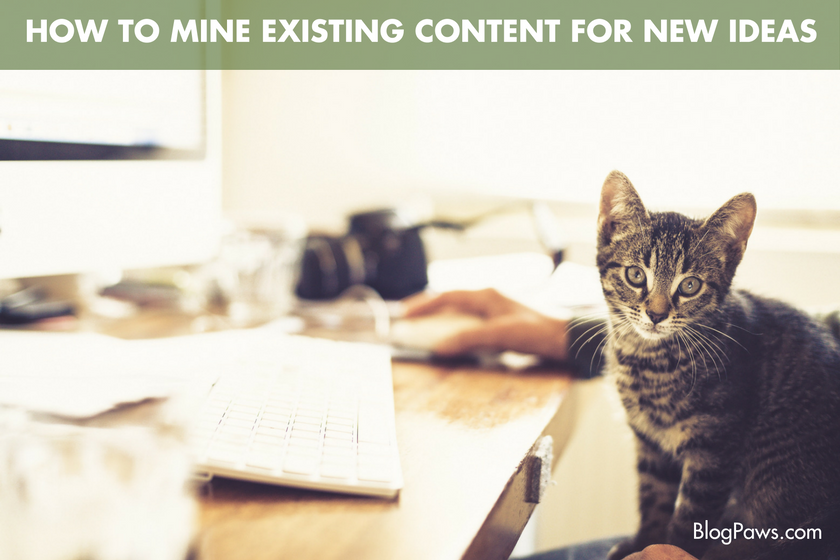 How to Mine Existing Content for New Ideas- BlogPaws.com