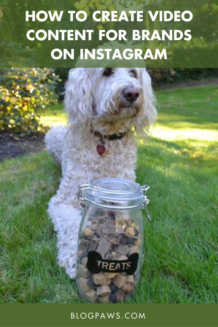 How to Create Video Content for Brands on Instagram | BlogPaws.com