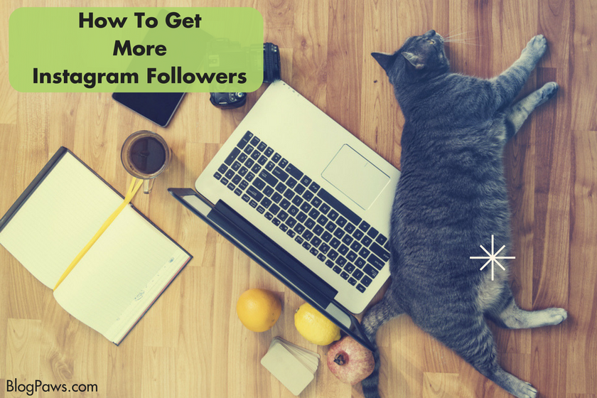 How to gain more Instagram followers