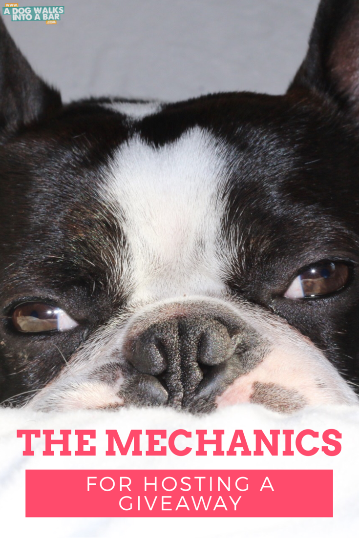 The mechanics of hosting a giveaway | BlogPaws.com