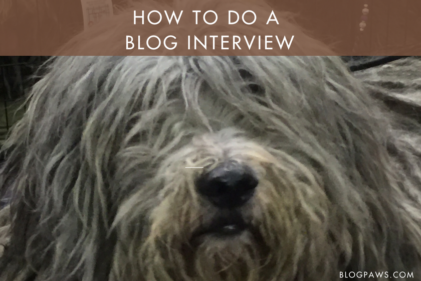 How to do a blog interview