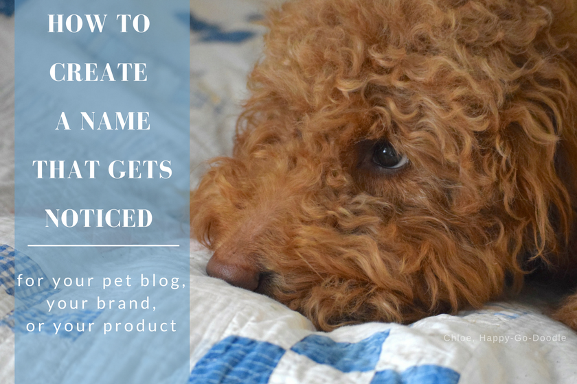 How to Create a Name that Gets Your Blog Noticed from BlogPaws.com