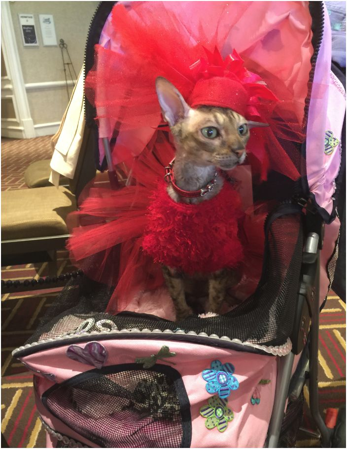 Cat in stroller at BlogPaws Conference