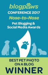 Best Pet Blog Photo badge