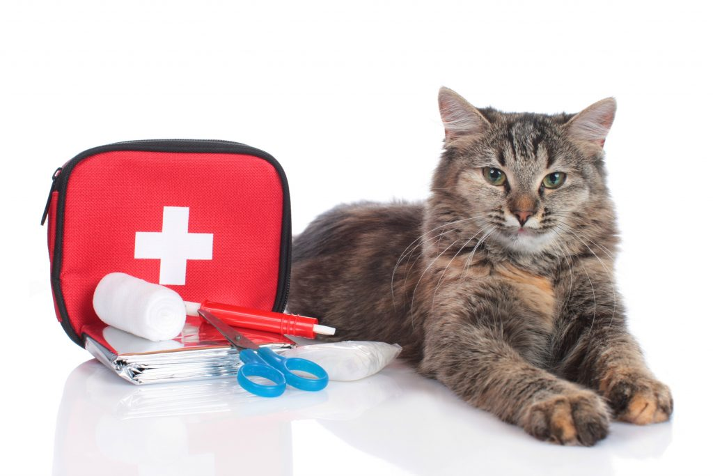 Disaster Preparedness for Pets and Their People