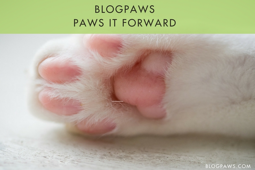 BlogPaws Wordless Wednesday Blog Hop: Pawing it Forward