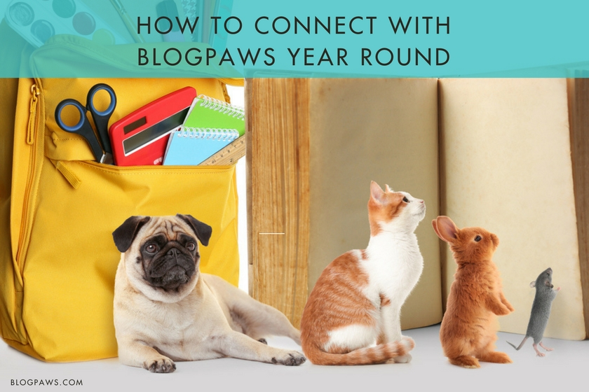 Connect with BlogPaws year round