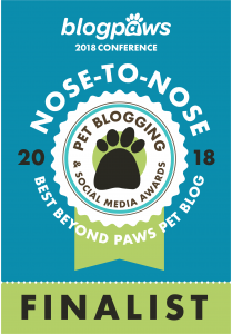 Best Beyond Paws Pet Blog