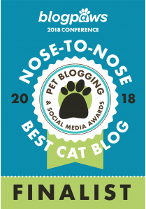 Best Cat Blog