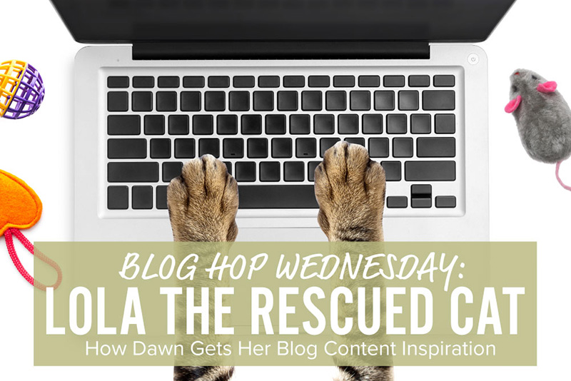 lola the rescued cat blog hop