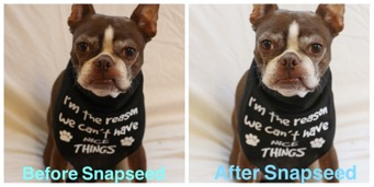 7 Best Image Editing Tools to Use for Your Photos - BlogPaws