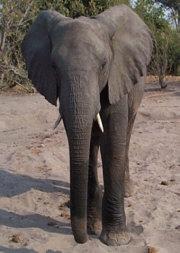 Elephant-nasa