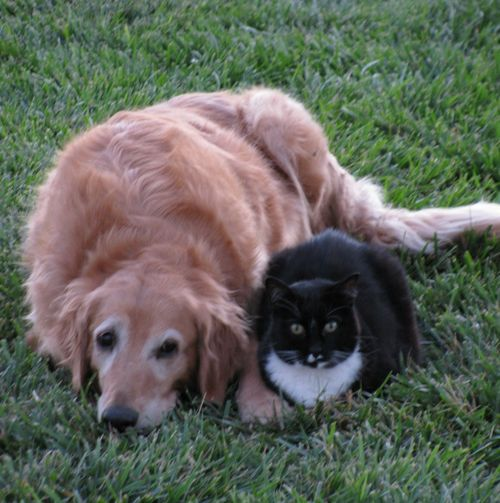 Cinnamon the dog does not know what to do about this cat
