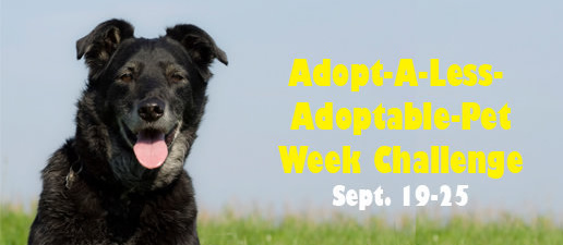 Adopt-A-Less-Adoptable-Pet Week Challenge Sept. 19-25