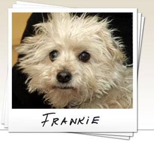 Edie-Jarolim-Frankie-the-dog