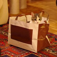 Kitten-in-bag-yellowcloud