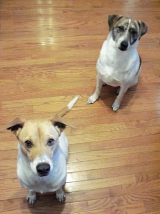 2 Punk Dogs
