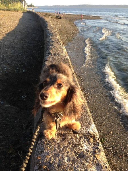 Dog by the water