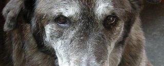 Senior-dogs-538x218