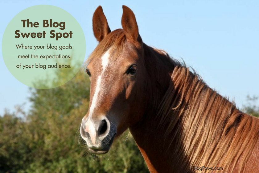 Your Blog's Sweet Spot