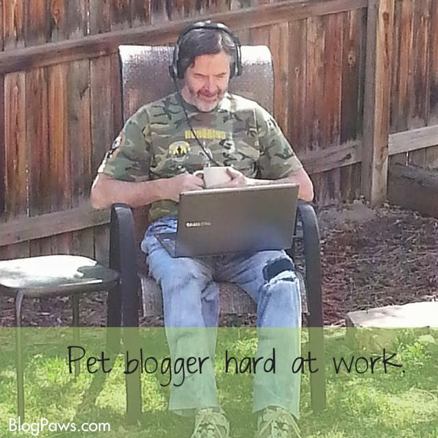 pet blogger hard at work