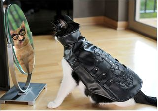 X_cats