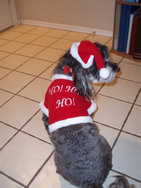 pet_Christmas