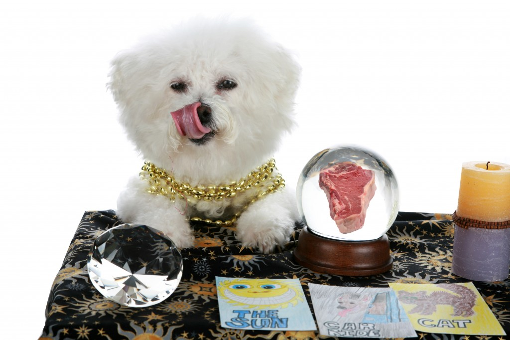 psychic pet crystal ball