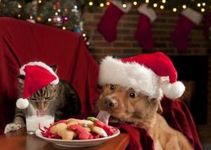 Shutterstock Cat Dog Christmas Cookies