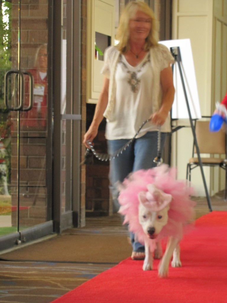 BlogPaws_redcarpet