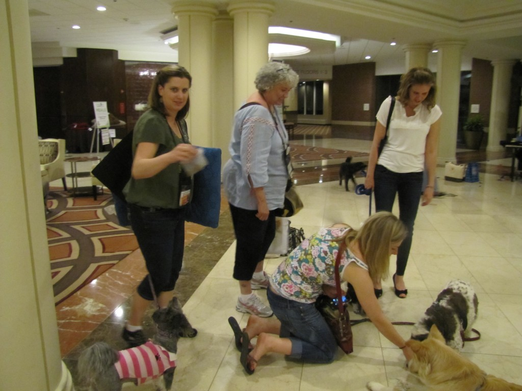 dogs_blogpaws