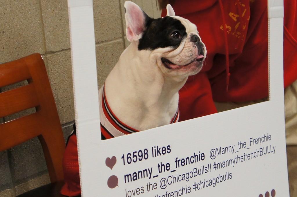 Manny_Frenchie