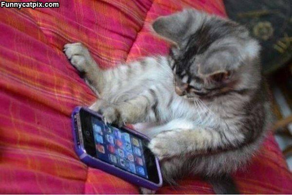 cat_texting