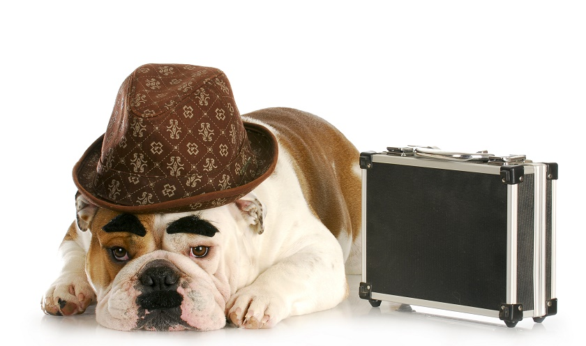 business suit dog