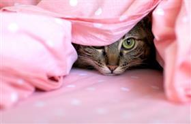Cat-Hiding.lg