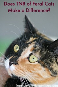 Does-TNR-of-Feral-Cats-Make-a-Difference
