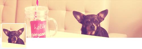 Irresistible Pets - @IrresistiblePet Twitter Header
