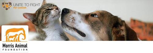 Morris Animal Foundation - @Morris_Animal Twitter Header