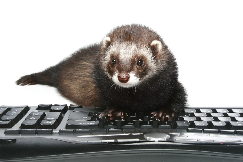 ferret business plan