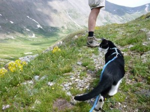 mountain climbing cat
