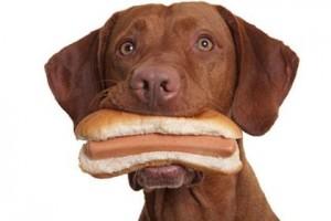 bbq foods pets