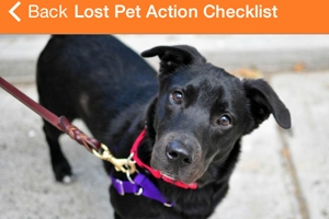 new-aspca-iphone-android-app-provides-essential-resource-pet-parents