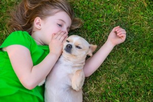dog adoption